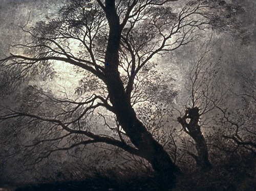 moonlight shining through tree